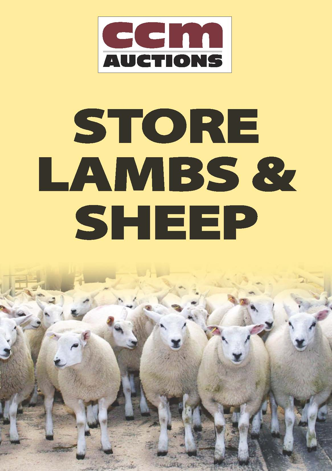 STORE LAMBS - WEDNESDAY 10TH AUGUST 2016
