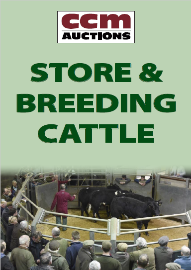 STORE & BREEDING CATTLE - WEDNESDAY 8TH JANAURY 2020