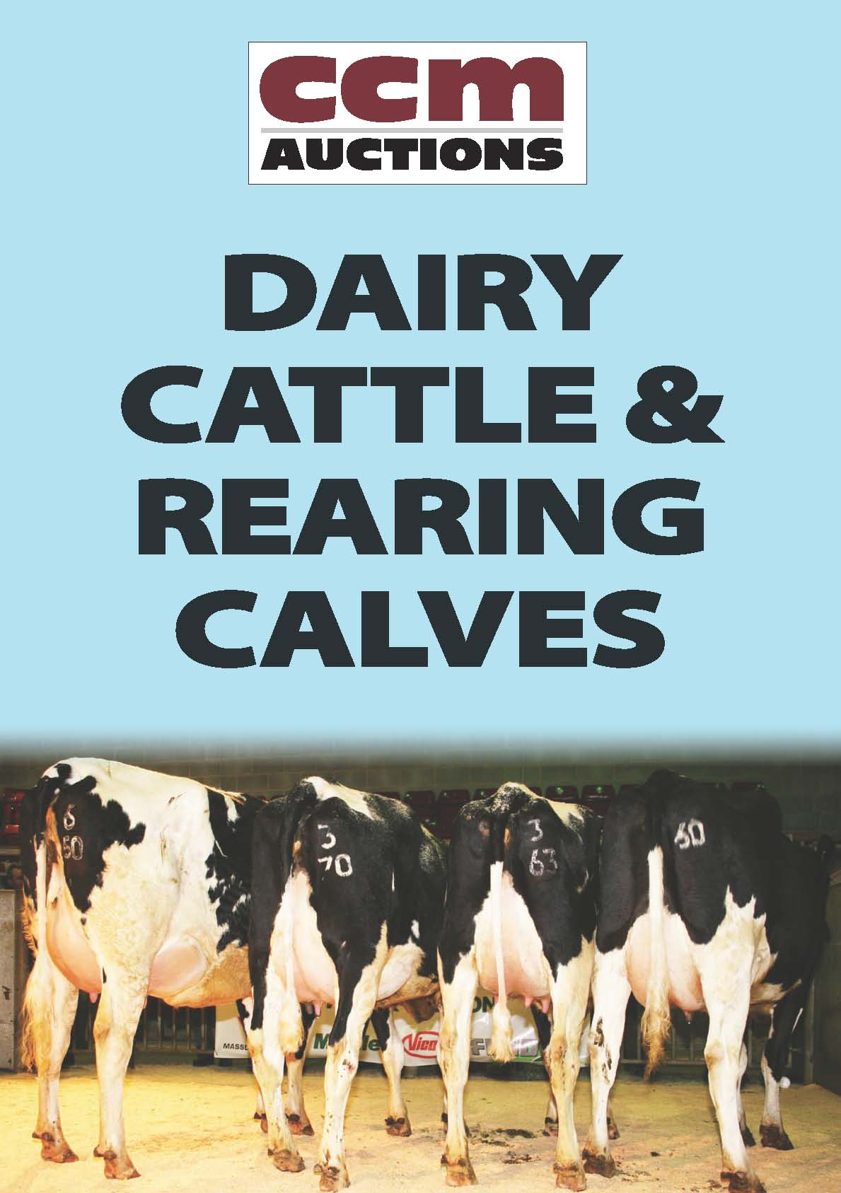 DAIRY CATTLE - MONDAY 8TH FEBRUARY