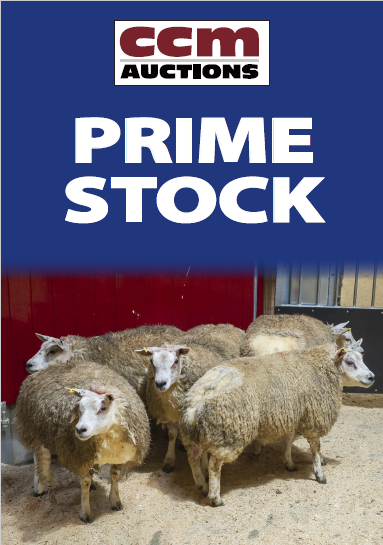 PRIME CATTLE SHOW - MONDAY 1ST MARCH 2021