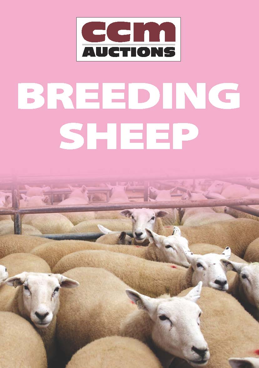BREEDING SHEEP - MONDAY 17TH APRIL 2017