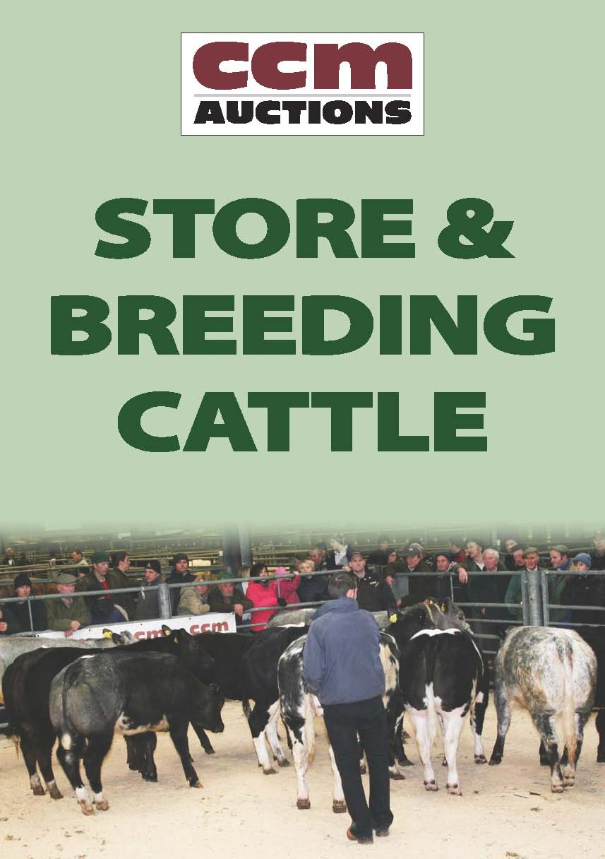 STORE & BREEDING CATTLE - WEDNESDAY 3RD JANUARY 2018