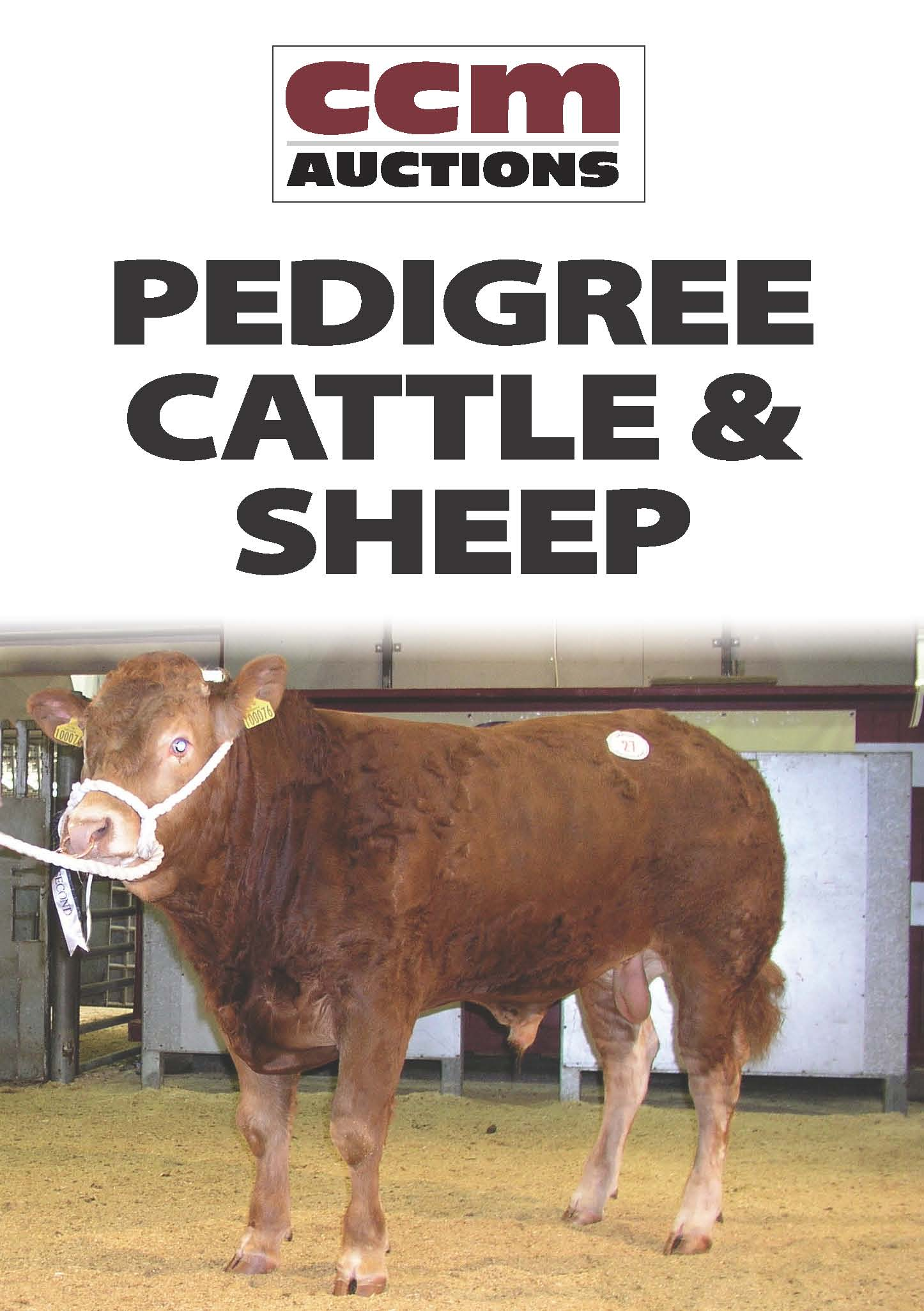 PEDIGREE CHAROLLAIS RAMS - TUESDAY 18TH SEPTEMBER 2018