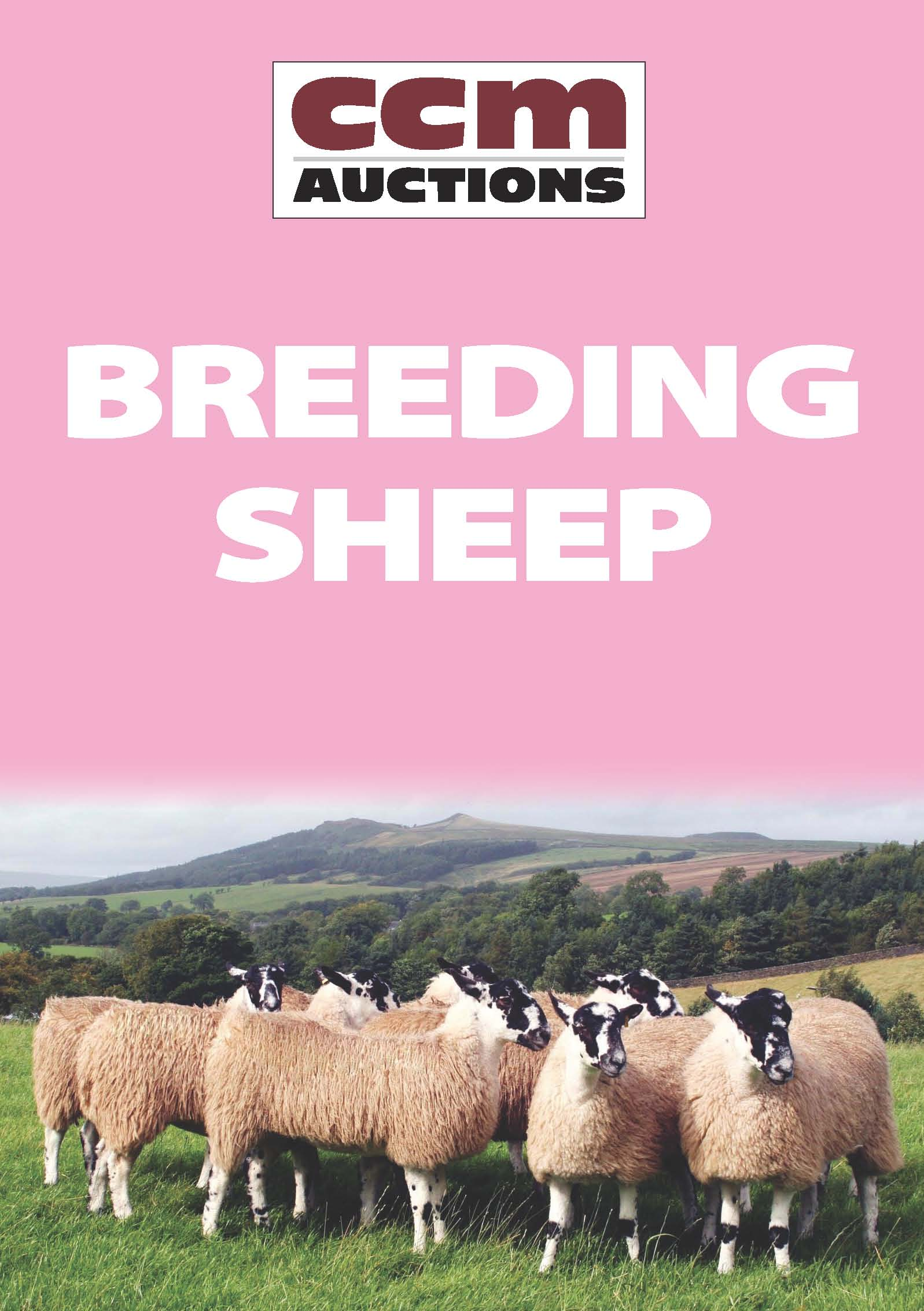 BREEDING SHEEP - MONDAY 30TH MARCH 2015