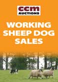 February Sale of Working Sheepdogs 15/02/2013 Report
