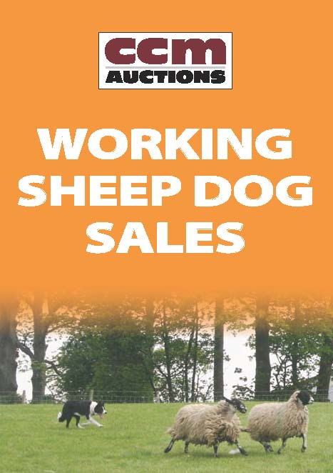 WORKING SHEEP DOGS - FRIDAY 17TH MAY 2019