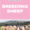 BFL SHEEP - TUESDAY 29TH SEPTEMBER 2020