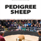 PEDIGREE TEXEL - 17TH & 18TH SEPTEMBER 2020