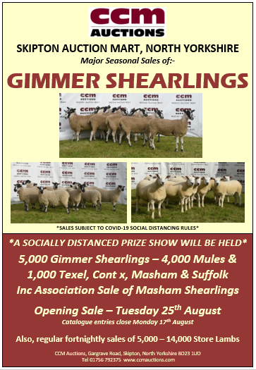SHEARLING GIMMERS - TUESDAY 25TH AUGUST 2020