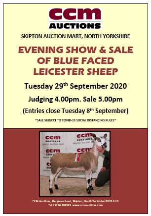 EVENING SALE OF BFL SHEEP - TUESDAY 29TH SEPTEMBER 2020